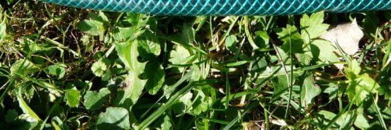 reinforced garden hose on grass